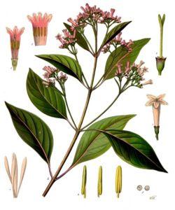 Quinina, ingrediente de la tónica usada en los Gin Tonics
